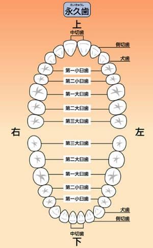 小児歯科が大切な理由