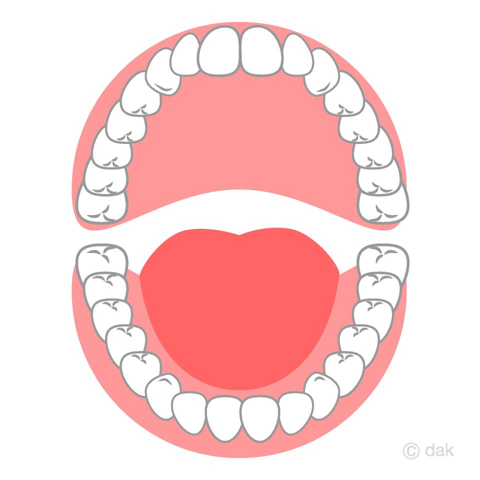 歯の生え変わり
